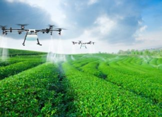 What Type of Industry is Agriculture?